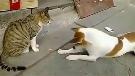 Angry Cats VS Dogs Funny Compilation 2017 !!!