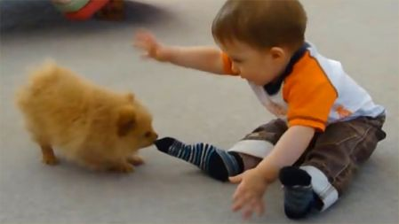 Funny Animals Trolling Babies and Kids