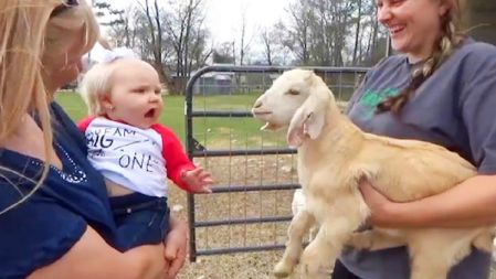 Funniest Moment Between Babies and Goats | Funny Babies and Pets